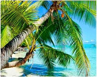 ocean photography, beach Decor, palm tree
