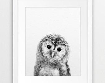 Owl Print, Nursery Wall Art, Baby Owl Photo, Woodlands Nursery Animal, Nursery Decor, Black And White Animal Print, Kids Room Printable Art