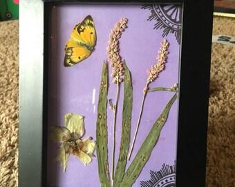 Dried, floral, framed art