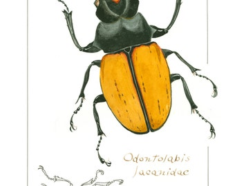 Odontolabis lucanidae Greeting Card