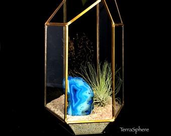 Blue Agate Geode AirPlant Sea Fan Geometric Terrarium-TerraSphere-Geometric Terrarium
