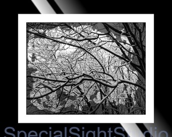 Winter Art Wall Decor Instant Download,Black and White Winter Photo,Tree Branches in Snow,Printable Winter Art,Winter Nature Decor,Wall Art