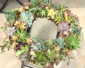 Living Succulent Wreath, Made to order
