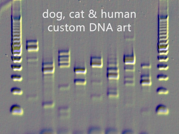Dogs cats dna artwork custom canvas metal art embossed by for Personalized dna art