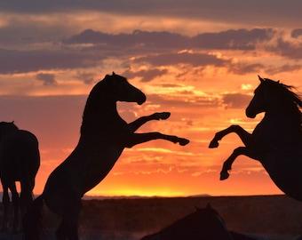 Wild Horses Sunset Fight