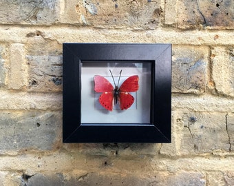 BUTTERFLY  MINIATURES  VI -  Handcrafted 2D print mounted inside picture frame