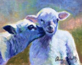 Sheep - Fine Art Print
