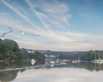Geese Flying Down The River Teffi in Cardigan, Fine Art Print