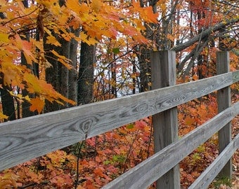Fall Fence - Autumn leaves along a rustic fence photograph