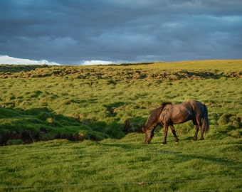 Icelandic Horse in the Midnight Sun Photographic Print