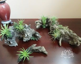 Tillandsia Driftwood Trio by Zentilly© for Wall or Desktop