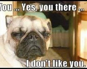 """2"""" x 3"""" Funny Pug Saying I Don't Like YOU Meme Pet FRIDGE MAGNET"""