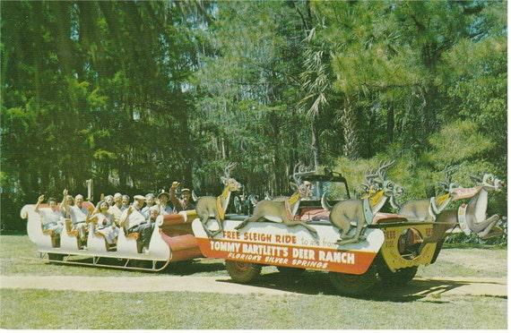 Tommy Bartlett's Deer Ranch, Silver Springs, Fl - Postcard - 1950's