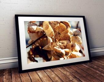 hydrangeas, flowers, gardens, natural art, nature photography, flower photography, massachusetts, new england photography, fine art print