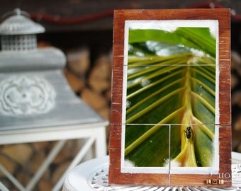 nature photography on wood planks | 20 cm x 30 cm
