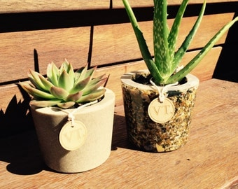 Sea Shell Pot Plants