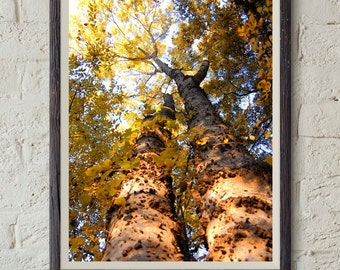 Nature Photography - Orange tree - Photography Print - 5x7 - 8x10 - 11x14