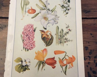 Antique Print - Members of the Lily Family - Botanical - Lithograph (A966)