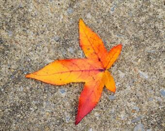 Leaf Photo Print, Nature Artwork, Home Decor, Nature Photography, Photo Print