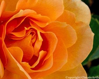Rose Digital Download Photography Instant Download Flower Digital Photography Fine Art Photography Digital Wall Art Flower Photograph