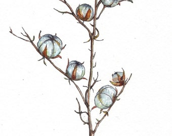 Cotton flower branch watercolor painting