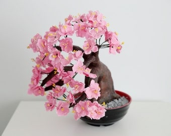 Bonsai Tree Cherry Blossom