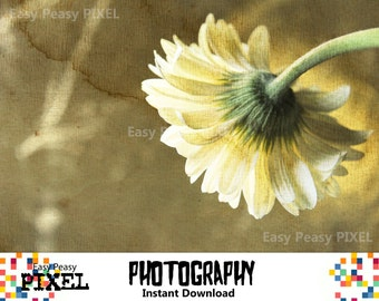 PHOTOGRAPHY, Printable Art, Photography Download, Texture, Flower, Digital Art, INSTANT DOWNLOAD, Poster, Photo, Wall Decor