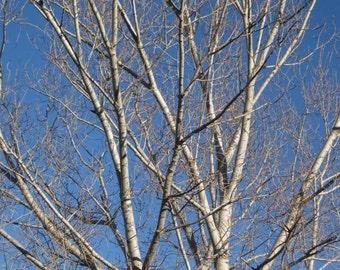 Photography - tree