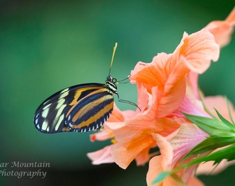 Butterfly, Butterfly Photography, Butterfly on flower, Fine Art Photography, orange flower, nature photography