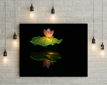 Chinese lights Photo of a Lotus