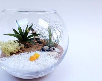 Medium Airplant Terrarium Fishbowl Kit with 2 Tillandsia Plants~ glass vase personalised gift wedding desk table centrepiece office planter