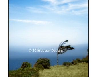 Breezy Tree