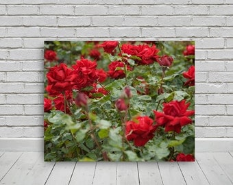 red rose garden photo, 20x16in, photo digital download,photography,download,print,wall art,photo, digital image,canvas,print