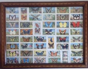 Mahogany and Glass Butterfly Tray