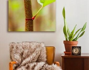 Canvas printing  | ladybug on a leaf macro photography | zen look