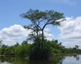 Atchafalaya Basin Louisisana