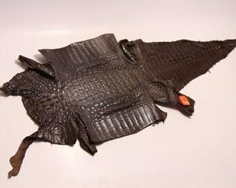 Genuine Caiman  Crocodile Skin Belly Glazed Brown Craft Suppy #LT01