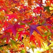 AutumnCalling