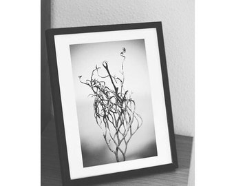 Seaside Photography Print - Black and White Abstract Seaweed Download