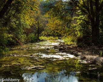 Nature Photography Looking Around Bull Creek in Austin Photo Print
