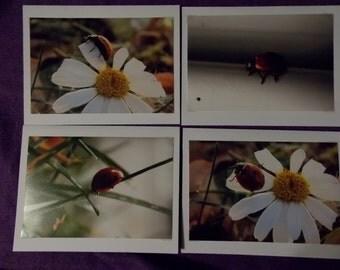 Ladybug photo greeting cards