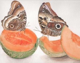 Butterflies on Cantaloupe