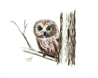 Little owl on a limb original work