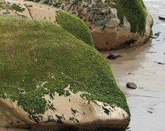 Rock Algae Beach Photo (4) 5x7 Photo, Fine Art Photo, Neutral Colors Photo, California Beach Photo