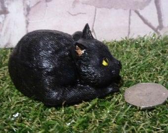 Curled up black cat.