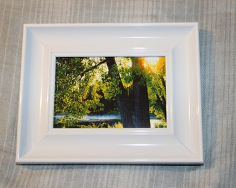 Tree and Sunlight - Framed Picture