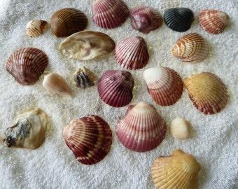 Shellfish raw lot no. 314