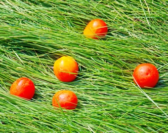 Photo of red tomatoes on green grass, Green, Photo, Herbs, red, digital download, image download, instant download, Home decor, Wall decor