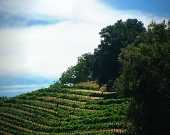 Vineyard on a Hill Photo on Canvas