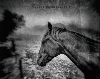 Horse Series_IV